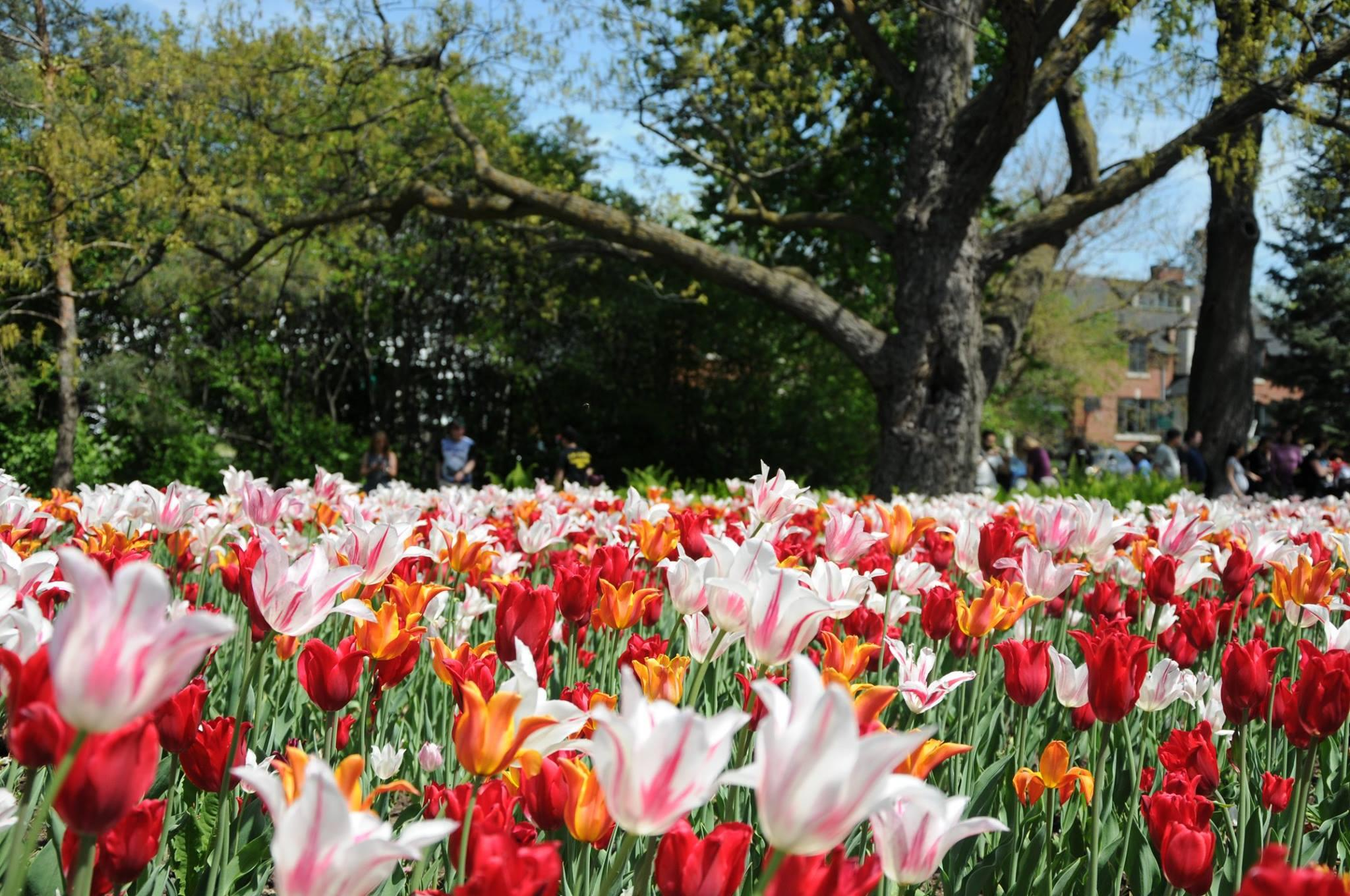 Don't miss these Instagram-worthy tulips in the Capital this May