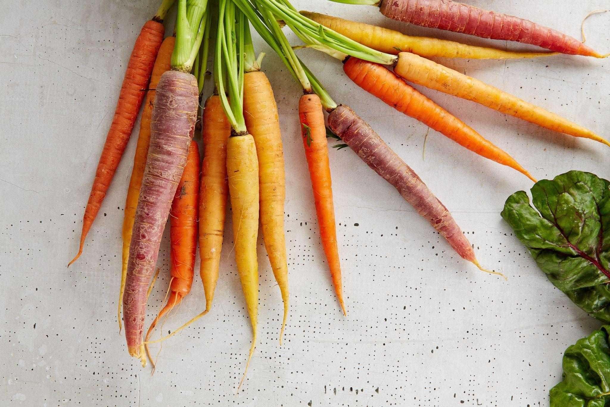 La fraicheur dans votre assiette : goûtez à la Ceinture de verdure de la capitale du Canada