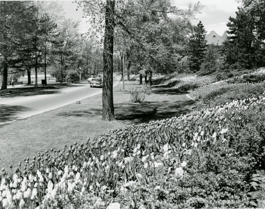 Tulips at Dows Lake. May 1958. Credit: Library and Archives Canada / E999914000
