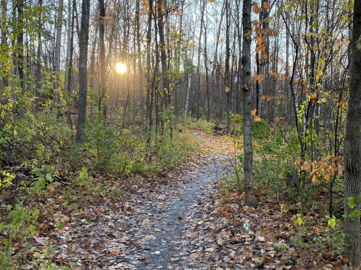 Gatineau Park trails in the in-between season
