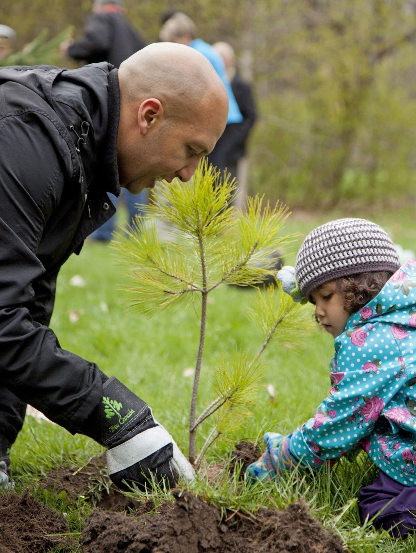 Un adulte et un enfant plantent un petit arbre