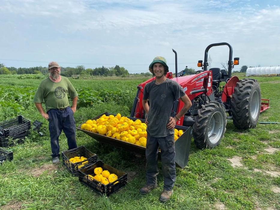 M. Milsom et un jeune travailleur agricole prenant fièrement la pause dans un champ, devant deux caisses et la pelle d'un tracteur remplies de poivrons jaunes