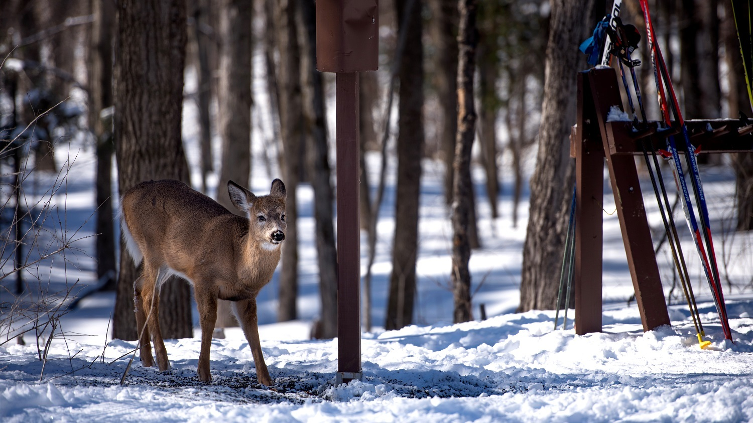The park is home to more than 50 mammal species, including the white-tailed deer.