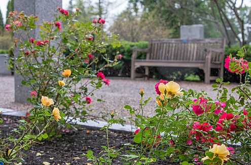 Bright pink and yellow roses in the foreground, and a bench in the background.