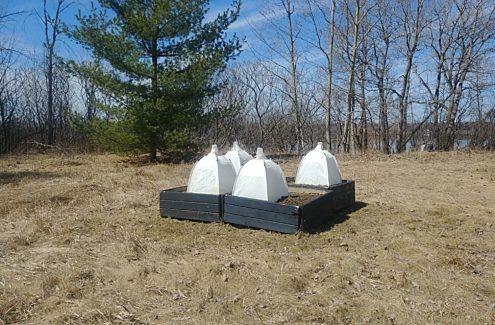 Quatre bacs à fleurs recouverts de tentes pour observer les abeilles qui font leur nid dans la terre.