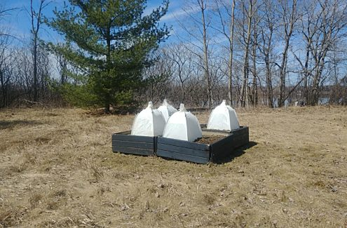 Four planters with tents to monitor ground-nesting bees.