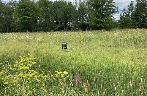 Restored meadow in the Greenbelt