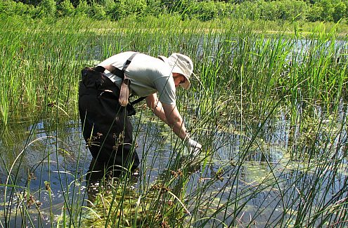 The Citizen Science Program - biology project