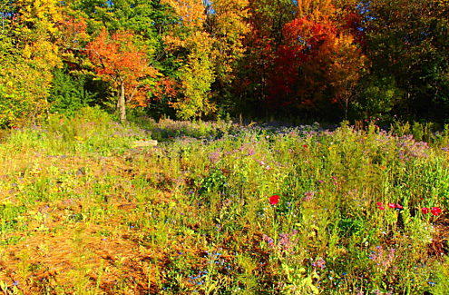 Site 2 (after, 2019): Meadow with blue, pink and red flowers, with fall colours in the background.