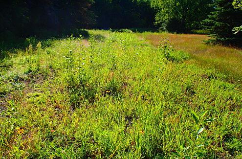 Site 4 (après, 2020) : Champ de hautes herbes vertes.