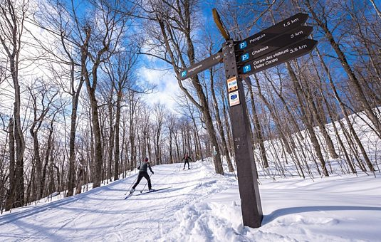 Skiers on Gatineau Park trails in winter