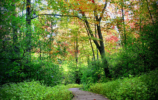 Lesser Known Greenbelt Trails to Discover This Fall