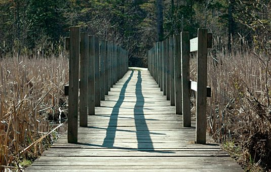 Jack Pine trail in the Greenbelt in spring