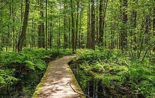 Sept sentiers de randonnée où prendre une bonne dose de nature, dans la Ceinture de verdure