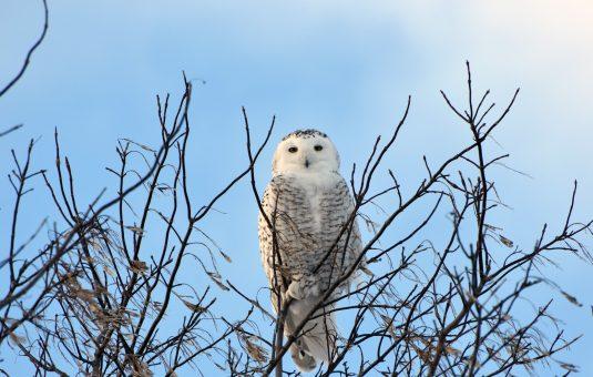 Winter Visitors to Canada's Capital Greenbelt