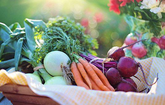 Agrotourisme à Ottawa : 11 fermes à visiter dans la Ceinture de verdure