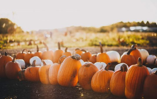 Five Greenbelt Farms You Won't Want to Miss This Fall