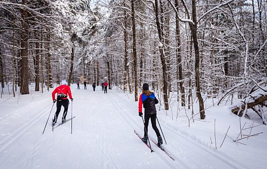 Grooming operations in Gatineau Park