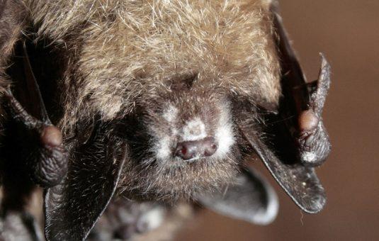Protecting bats
