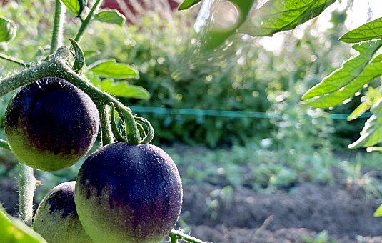 Quelles fermes de la Ceinture de verdure visiter cet été?