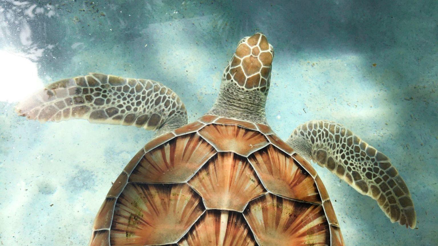 Visuel d'une tortue